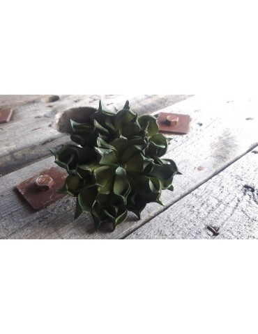 Kunst Sukkulente Papier grün green 11944